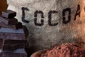 Cocoa beans powder chocolate