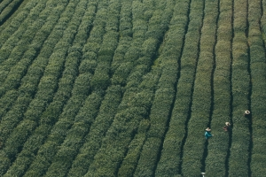 Commodity Management for tea-software
